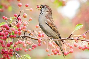 Counsellors' Profiles. Autumn berries and bird