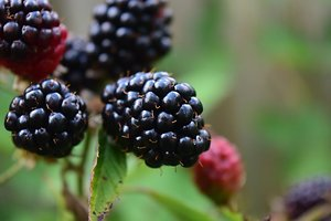 About Counselling. blackberries
